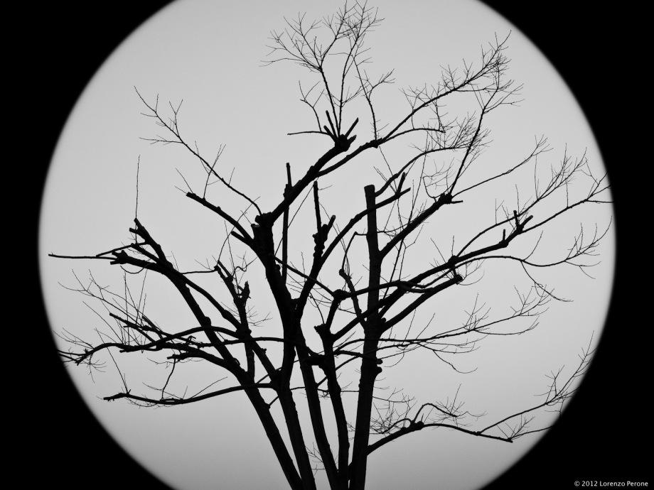 La luna e l'albero