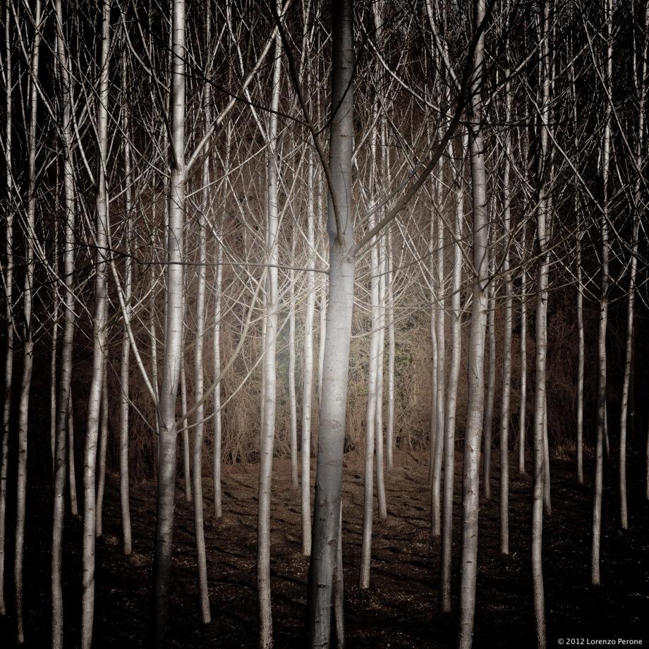 Il bosco mi inquieta